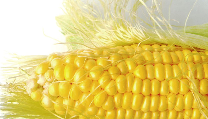 Healing Facts - Corn