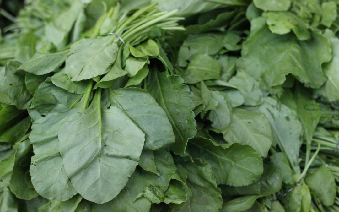 One Serving of Greens Daily Slows Brain Aging by Over a Decade