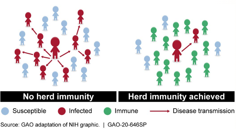 Herd Immunity to Covid-19 May Be Closer than Expected Based on New Discoveries