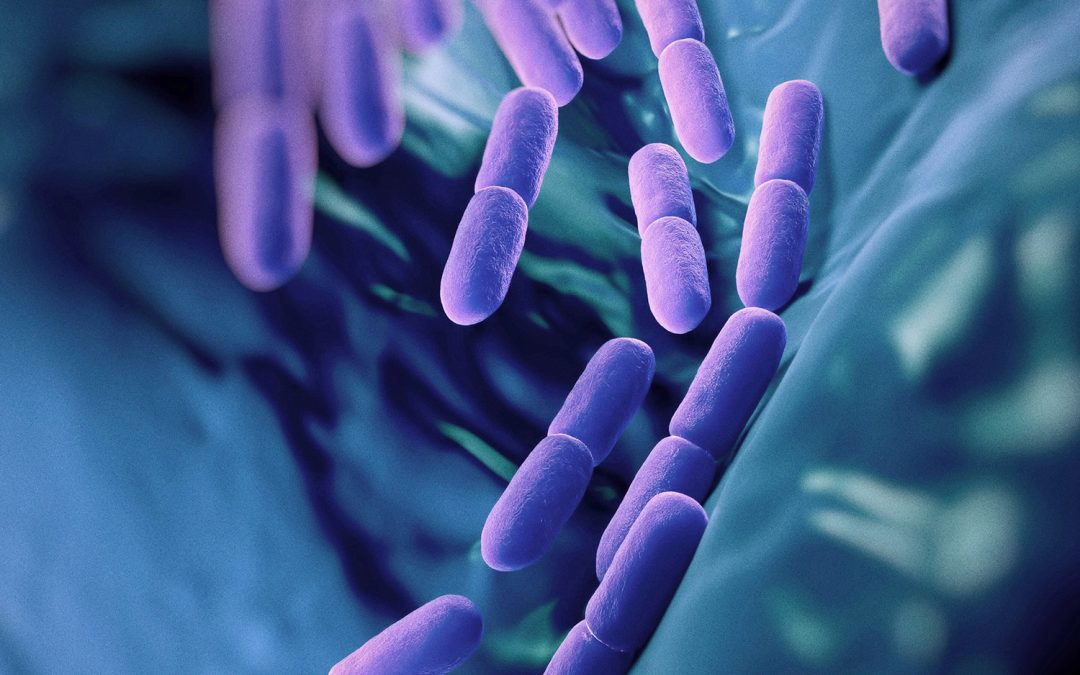 HK L-137 is a Heat-Killed Probiotic with Powerful Immune Effects